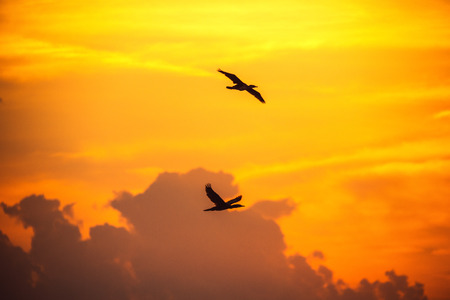 colorful cloudscape: Beautiful sunrise with cloudscape. Silhouette of two flying birds againt the colorful sky. Stock Photo
