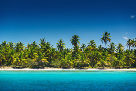 caribbean beach: Palm trees on the tropical beach, Saona Island reserve, Dominican Republic