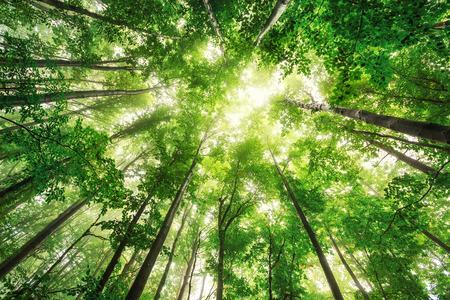 Piękna przyroda w godzinach porannych w mglistym lesie wiosny z promieni słonecznych