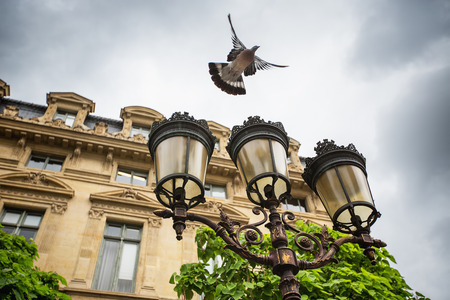 pigeon: Flying pigeon and Street lantern in Paris, France
