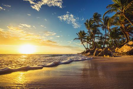 Palmen op het tropische strand, Dominicaanse Republiek
