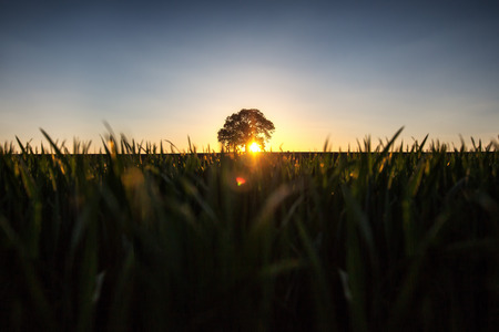 field sunset: ree in the field, sunset shot