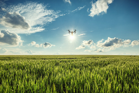 Vliegende drone en groene tarwe veld Stockfoto