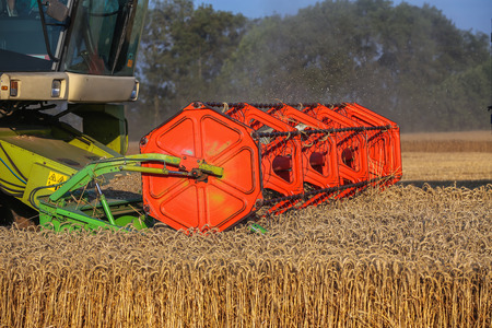 agricultural farm land: Combine harvester agriculture machine harvesting golden ripe wheat field