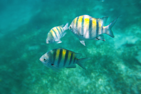 reef fish: Photo of a tropical Fish on a coral reef