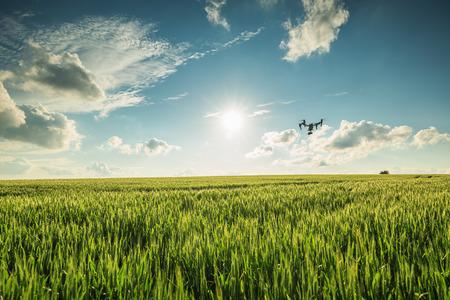 在麥田上空飛行無人機 版權商用圖片