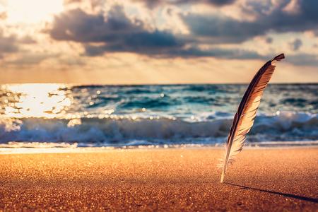 cana: Gull feather stuck into the sand sea, sunrise shot Stock Photo