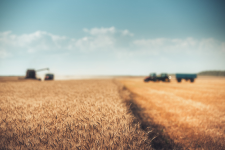 Defocused Combine harvester agriculture machine harvesting golden ripe wheat field, fil look  Banco de Imagens