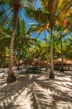 cana: Palm trees on the tropical beach, Dominican Republic