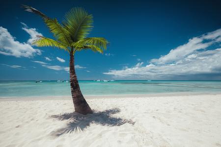 cana: Palm and tropical beach
