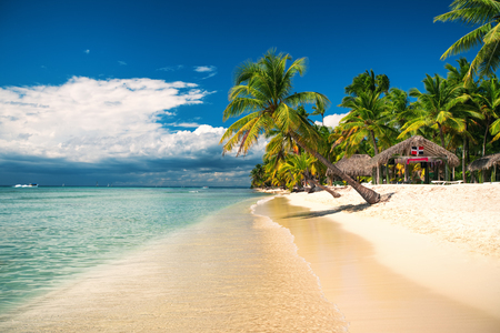 Palm and tropical beach on Saona Island, Dominican republic Stok Fotoğraf - 80620905