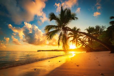 Tropical beach in Punta Cana, Dominican Republic