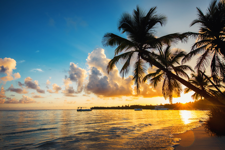 cana: Palmtree silhouettes on the tropical beach, Dominican Republic
