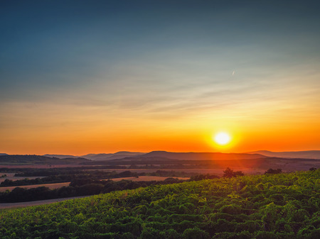 A Beautiful Sunset over vineyard in Europe.