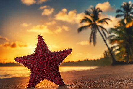 cana: Sea Starfish on the beach at sunrise Stock Photo