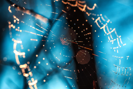 Spiderweb with dewdrops on blue background. Stock Photo