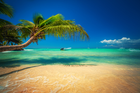Exotic Beach in Dominican Republic, Punta Cana 写真素材