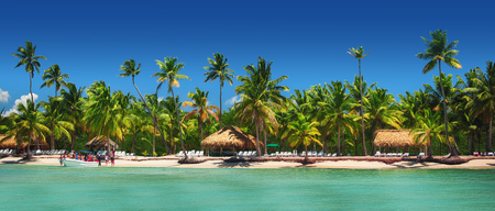Panoramic view of Exotic Palm trees on the tropical Island beach