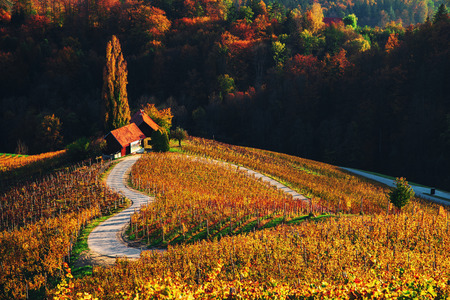 Famous Heart shaped wine road in Slovenia, view from Spicnik near Maribor. Reklamní fotografie
