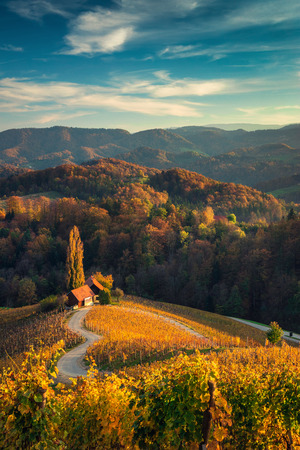Famous Heart shaped wine road in Slovenia,  view from Spicnik near Maribor. Banco de Imagens