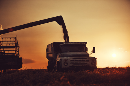Combine harvester machine working in a wheat field at sunset. Stockfoto