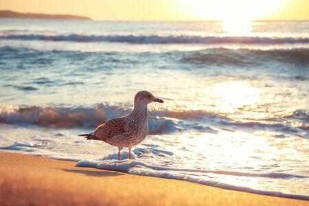 Seagull on the beach sand against the sea.