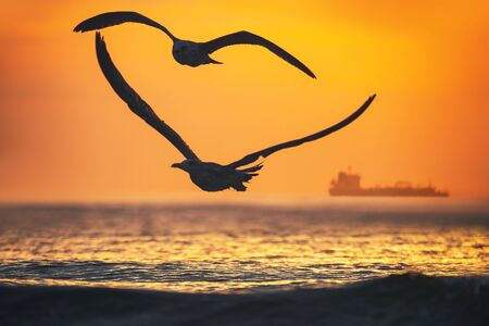 Flying seagulls over the sea on sunrise
