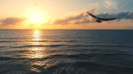 Seagull over the sea - aerial view seascape.