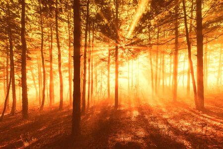 Les rayons du soleil traversent les arbres dans la forêt brumeuse.