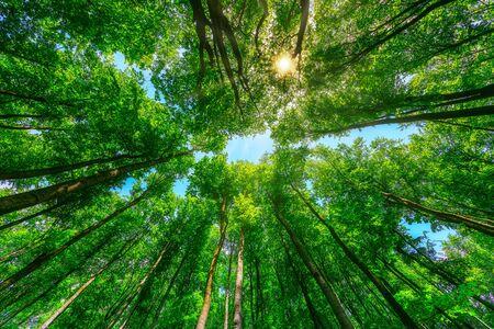Hermosa naturaleza por la mañana en el brumoso bosque de primavera con sol