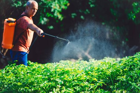 Farmer spraying vegetables in the garden with herbicides, pesticides or insecticides.