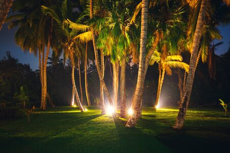 Tropical Night Sky, Coconut palm trees and stars