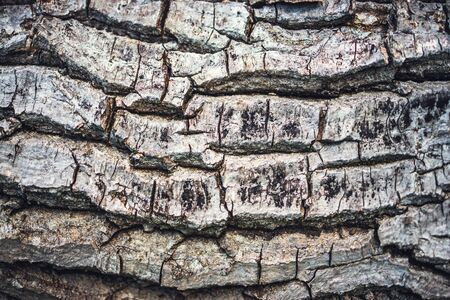 Wood bark. Old tree surface as texture background.