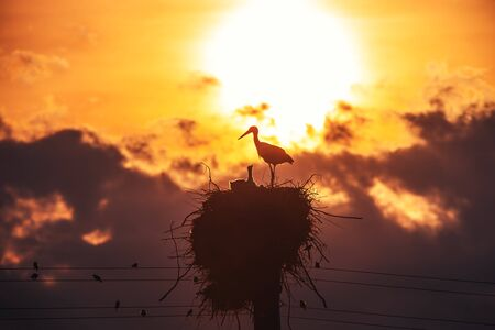 Storks feeding babies in a nest against sunset sky with clouds 스톡 콘텐츠 - 150647270