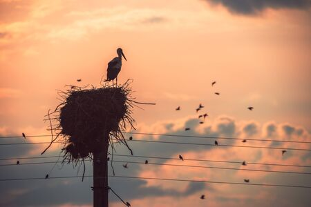 Stork in a nest and flying birds in a sunset sky 스톡 콘텐츠
