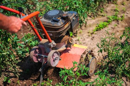 Farmer working with agriculture weeding machine around vegetable plants. Horticulture. Stock Photo
