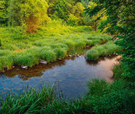 River in the forest. Nature background