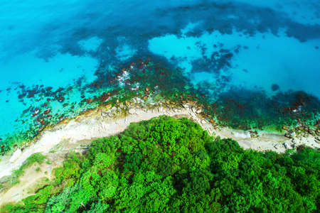 Aerial view of wild beach and forest