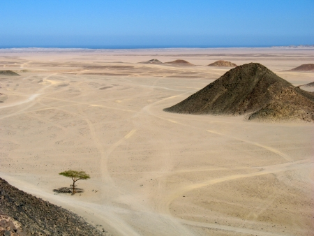 Eastern Desert of Egypt (landscape with mountains and the lonely tree) photo