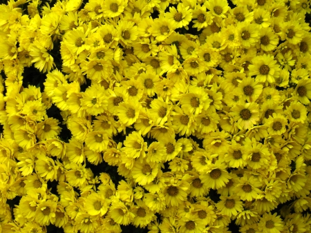 Big bunch of small yellow flowers stock photo picture and royalty big bunch of small yellow flowers stock photo 14329284 mightylinksfo