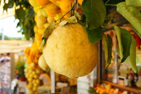Large lemon fruit compared to other citrus fruits Stock Photo - 14780506