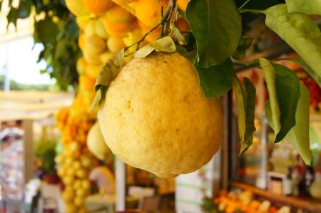 Large lemon fruit compared to other citrus fruits Stock Photo - 14780506