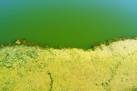 Green water and duckweed on the Arno River in Florence photo