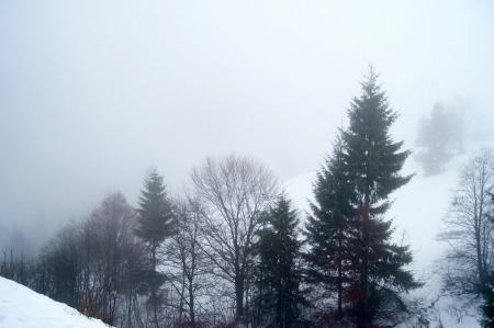 hollows: View of the winter forest and hollows mist-shrouded