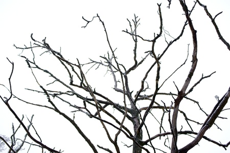 Curves of dry branches crooked tree Stock Photo