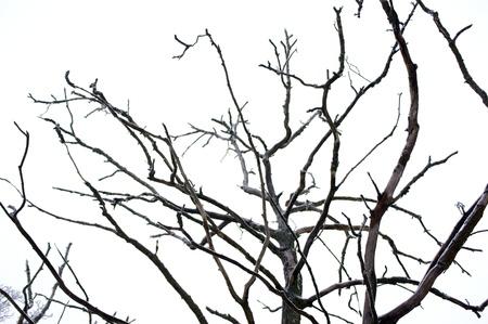 dode bladeren: Curves van droge takken Crooked Tree Stockfoto