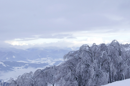 Trees under the ice glaze on top of the mountain in the Carpathians photo
