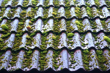 Slate roof is covered with green moss