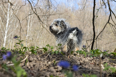 Small doggie in the forest in the early spring photo