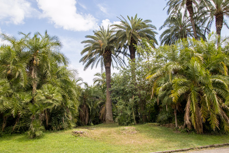 Tropical garden with palm trees Capodimonte in Naples photo